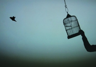 birdfromcage